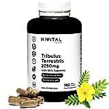 Tribulus Terrestris 2250 mg. 180 gélules végétales. 100% naturel avec 90% de saponines. Augmente la testostérone, la masse musculaire, l'endurance et l'énergie, et aide à la récupération musculaire