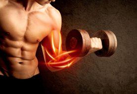 Les compléments alimentaires pour la prise de muscle